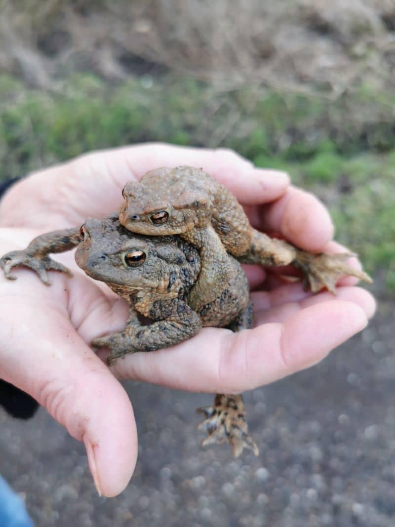 Kröten auf der Hand